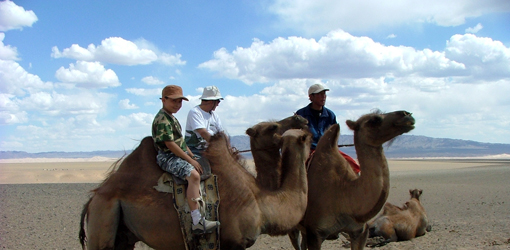 Happy nomads and singing camels